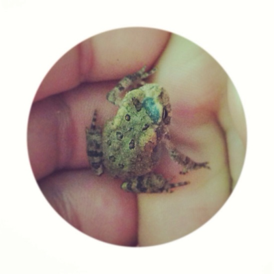 Tiny Frog - Julie101.com